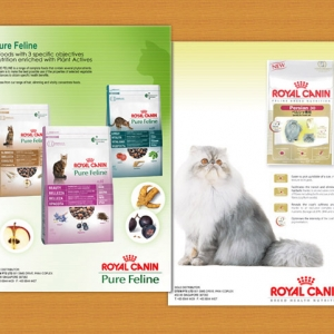 Royal Canin Advertisement Graphic Designer